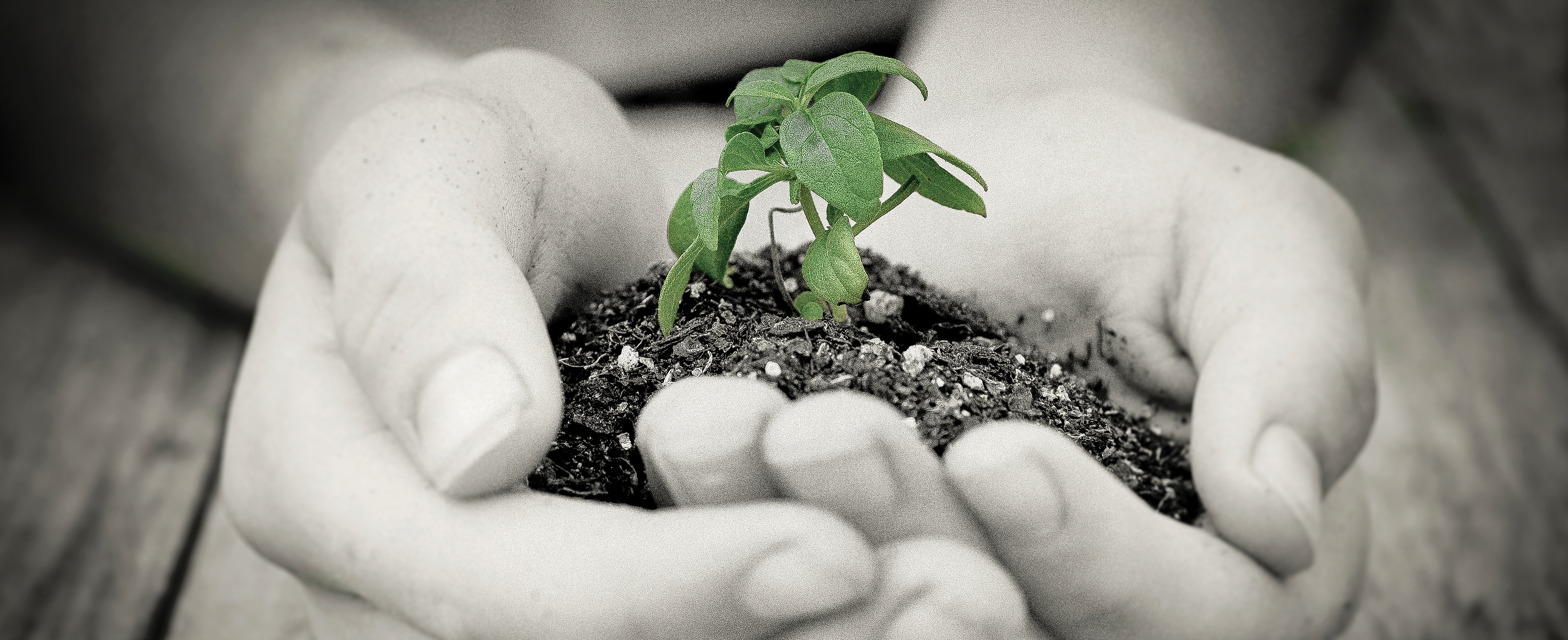 Plant seeds of hope